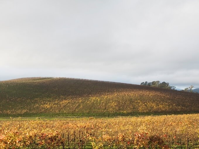 Фотография от 27 ноября 2006 года, холм засажен виноградниками